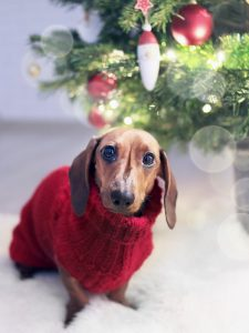 Keep Your Pet Happy And Warm This Winter Holiday